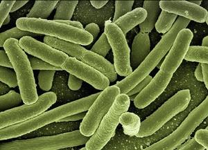 ノロウイルス「吐き気、嘔吐、下痢、腹痛」の症状「予防と2次感染対策」とは!?