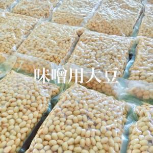 手作り味噌用大豆水煮