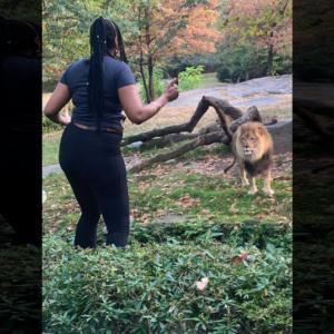 超危険!!動物園の柵を乗り越えてライオンを挑発した女性の末路…