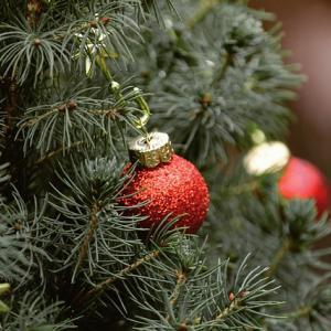 パリで使い終わったクリスマスツリーはリサイクル