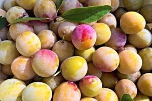 【フランスの美味しい果物】ミラベル