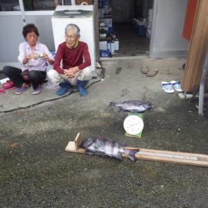 ☆平成30年 小下田 石鯛6-3