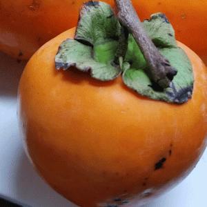 柿をもらったので干し柿を作る件 #畑ブログ #野菜先輩