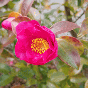 冬の朝のきれいな花たち