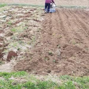 耕運機を動かして土地を耕す