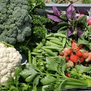 色んな野菜たちを収穫する話!