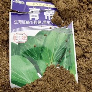 チンゲン菜、春菊、ホウレン草の種まきを行った話!