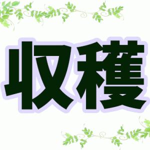 細長ナス驚きの40センチ!! #畑 #家庭菜園 長スギィ