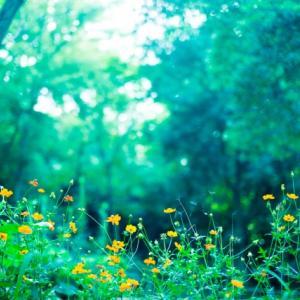 白い花をつける樹木22選
