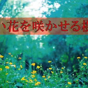 赤い花をつける樹木(庭木)6選【写真付き】