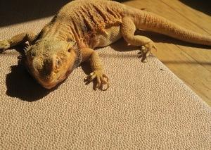 最期の日光浴