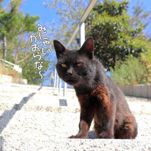 神社の階段猫たち~