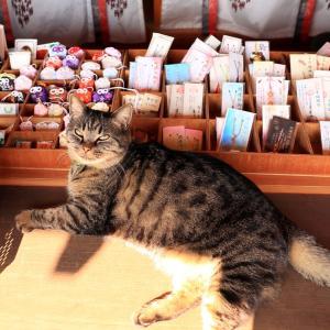 2年ぶり訪問の、猫神社です~