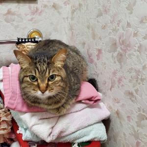 うちの猫は可哀そう?