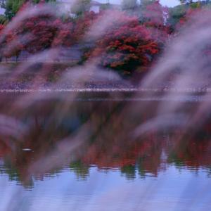 正倉院展と奈良公園の紅葉状況【奈良県奈良市】
