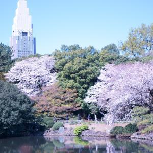 新宿御苑の満開の桜はどうなったかな~?