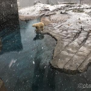 ほどんど誰もいない札幌円山動物園