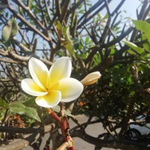バリ島いい朝です