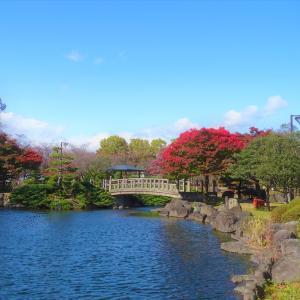 ♪散歩写真 紅葉♪