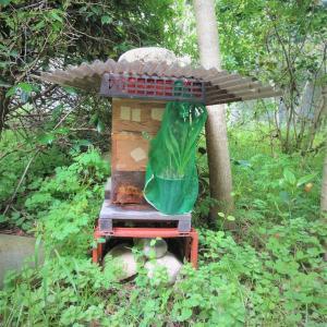 ♪再び日本ミツバチ捕獲成功!。 その後のヤマガラ♪
