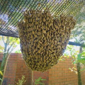 ♪日本ミツバチの飼育ハプニング♪