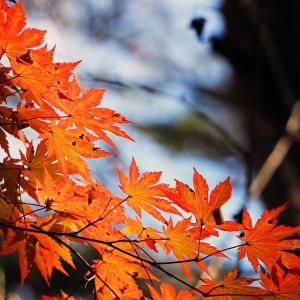 「紅葉」を英語で表現しよう!紅葉に関する英語表現を解説!