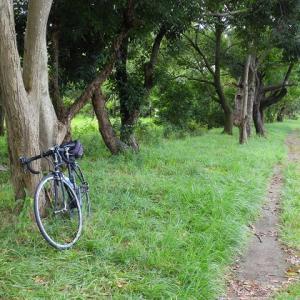 最近の自転車活動