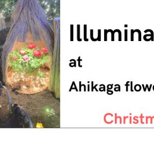 日本三大イルミネーション『あしかがフラワーパーク』でクリスマスデート!!