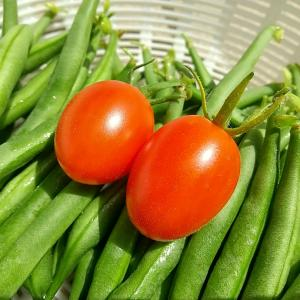 庭の夏野菜を収穫 その3
