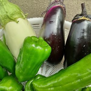 庭の夏野菜を収穫 その4