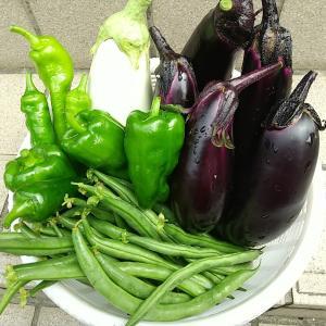 庭の夏野菜を収穫 その5
