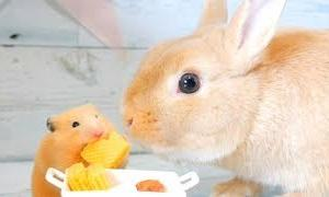【ASMR】うさぎとハムスターが仲良くお食事 🐰🐹 My rabbit and my hamster are a best friend💓【音フェチ】