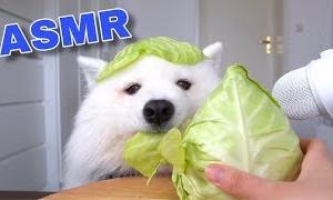 ASMR Dog Reviewing Different Types of Food #6 I MAYASMR