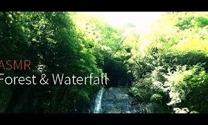 【ASMR】森の中の小さな滝 (環境音) Forest Waterfall Sounds