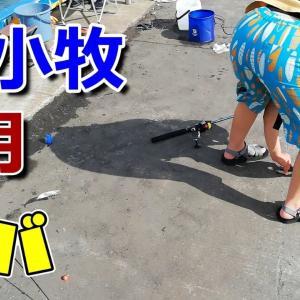 2020年8月13日苫小牧港でさびき釣り!小サバが入れ食いで大満足!!