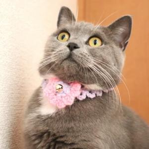 手作りの猫の毛糸首輪が可愛いすぎる|ブリティッシュショートヘア