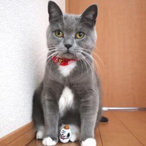 猫がクーナッツのおもしろさに気付いた瞬間