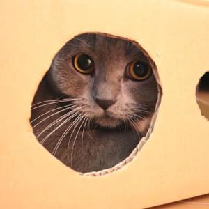 ダンボールの手作り猫ハウスが捨てられない!?