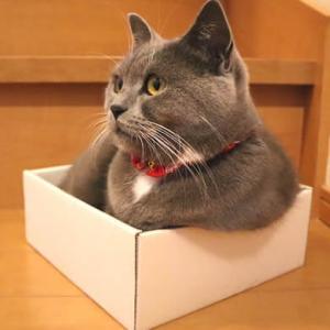 猫は小さな箱がやっぱりお好き?