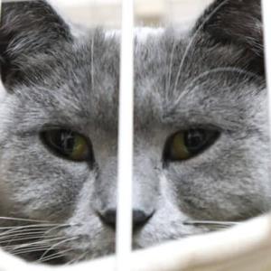 寝ている猫のドアップ写真はバレずに撮ることはできるのか!?