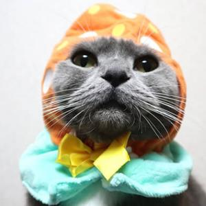 猫のかぶりもの|季節外れのイースターエッグに挑戦