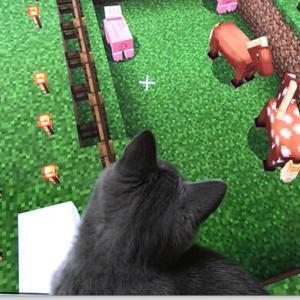 【動画】マインクラフトの中に迷い込んだリアル猫