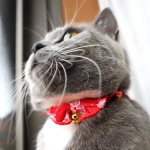 寒い日でも網戸でニャルソックしたい猫