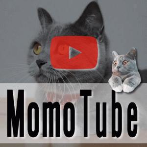 【動画】子猫の初めてシリーズ「はじめての猫じゃらし」|Momo Tube(モモチューブ)