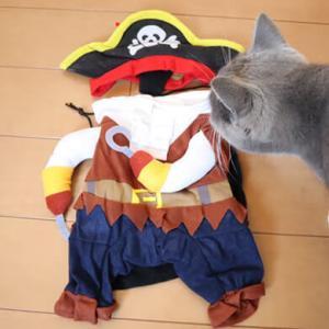 【前編】海賊のコスプレ到着!ペット用コスチューム衣装を猫に着せてみた!