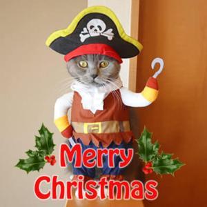 【後編】クリスマスに海賊のコスプレを着る猫|ブリティッシュショートヘア