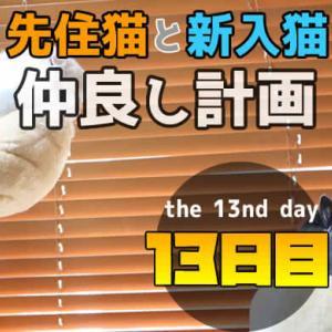 【多頭飼い13日目】先住猫と新入り猫が同じ部屋で寝る距離感に!