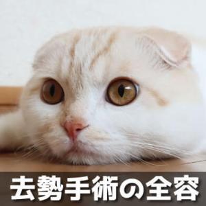 【猫の去勢】実体験をまとめた全容!費用や手術の流れ