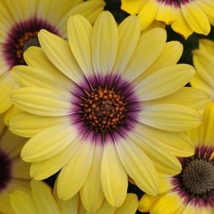 夏の暑さ対策18.ガーデニング(花壇)