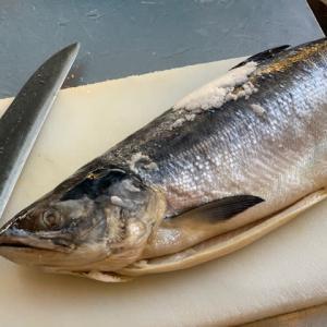 北海道産時鮭の2.7kgが入荷!